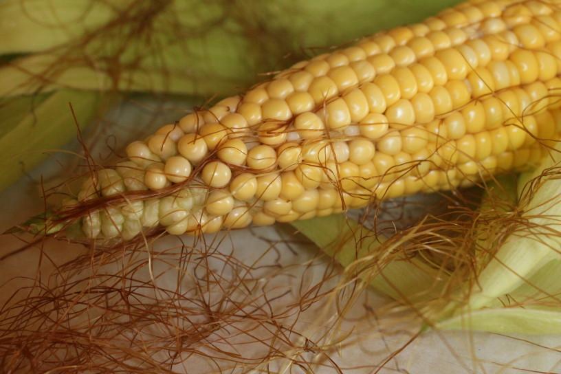 maslena koruzna zrna (1)