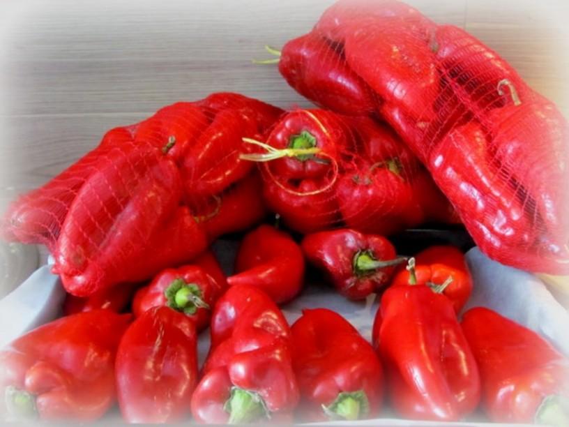 cepkana-paprika-1