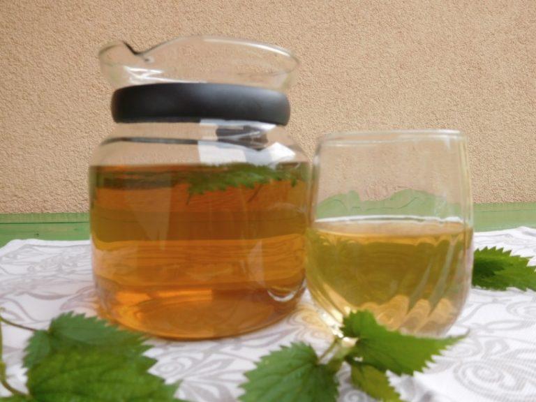 Zdravilne koprive za čaj