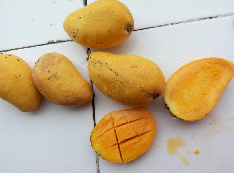 Mangov gosti sok6