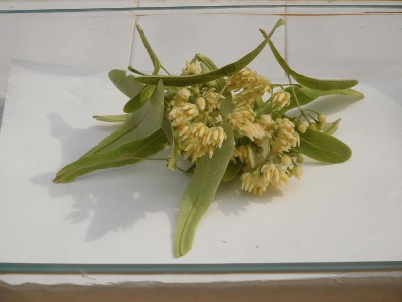 caj-iz-lipovih-cvetov