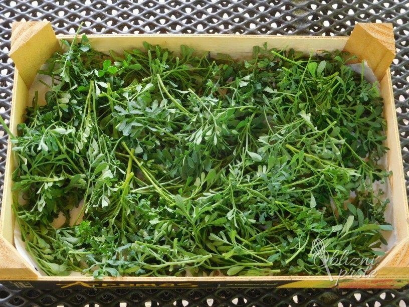 Sušenje vinske rutice za mešanice čajev
