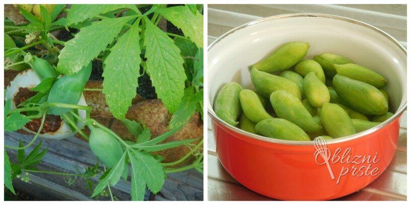 Inka kumarice v vložene kisu